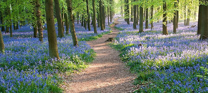Home. Bluebell Path Personal Hero Image